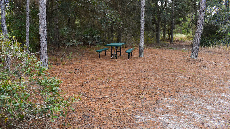 Picnic table under pines