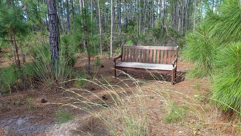 Wooden bench under pines