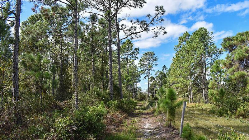 Trail along fenceline