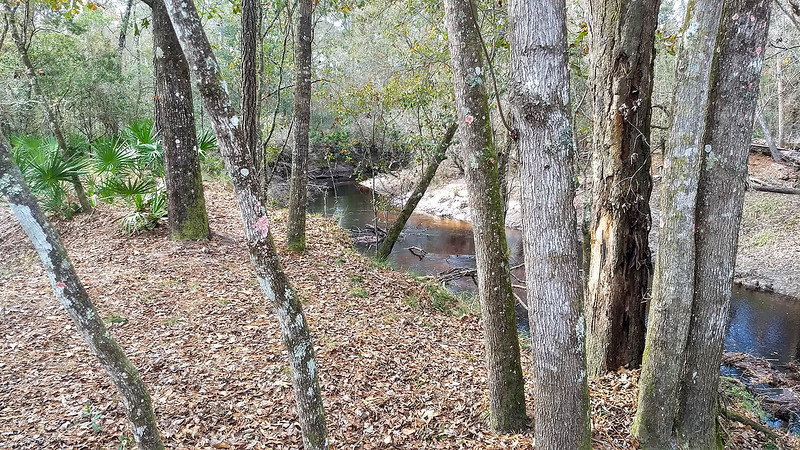 Stream next to flat ground in woods