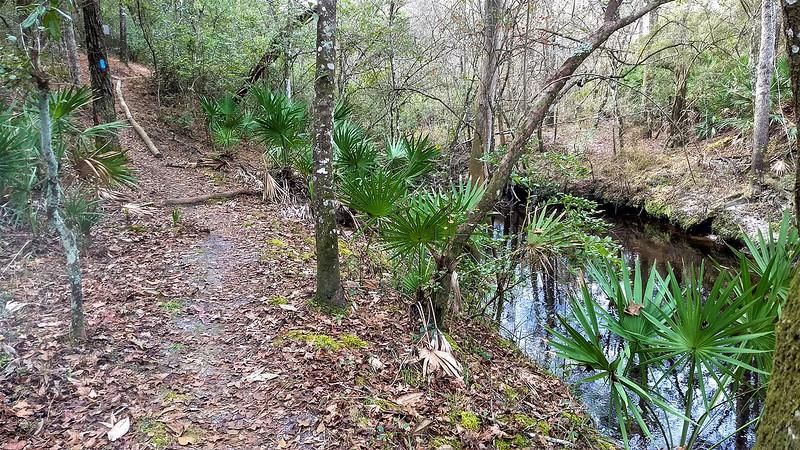 Blue blazed trail alongside creek