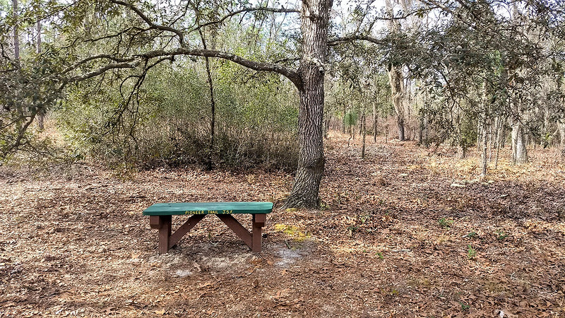 Green and brown bench in woods