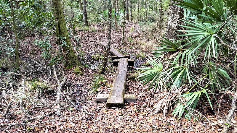 bog bridges in wet area
