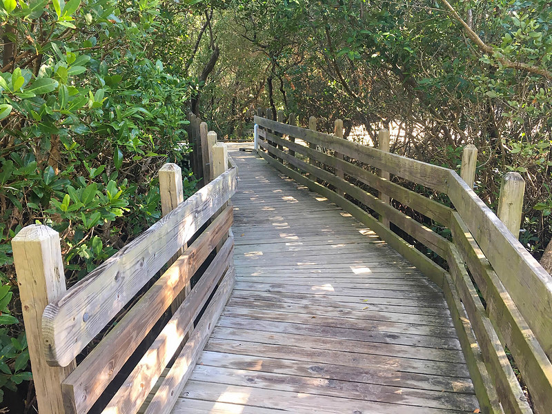 Boardwalk through mangroves