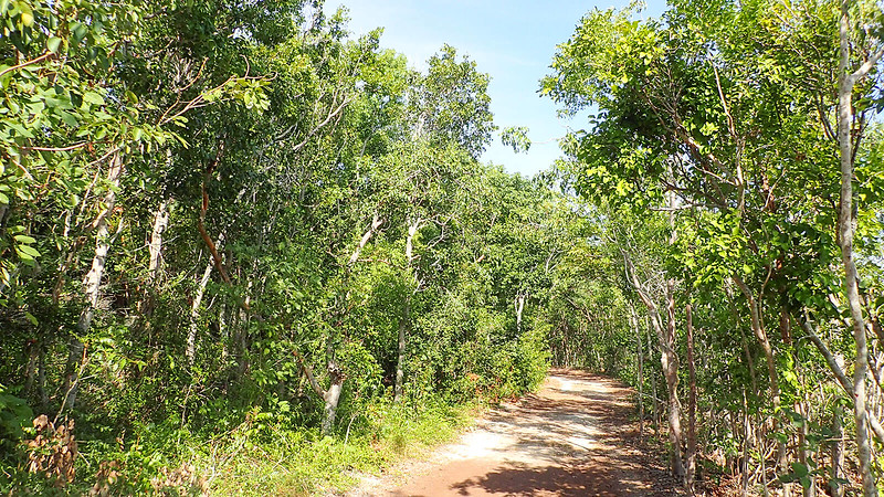 Broad path in tropical forest