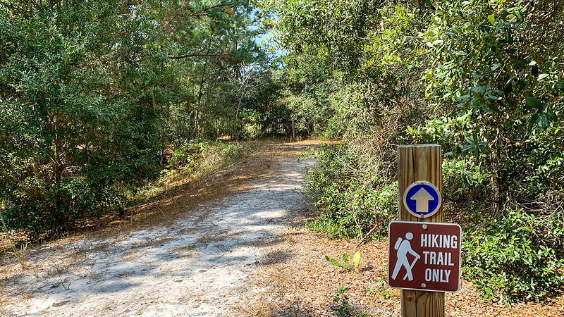 Hiking trail only sign pointing down path in forest