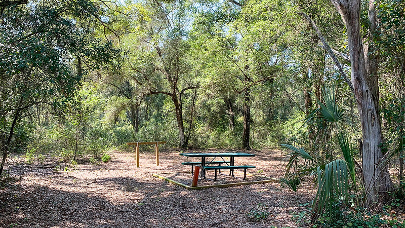 Clearing in forest with picnic table and hitching post