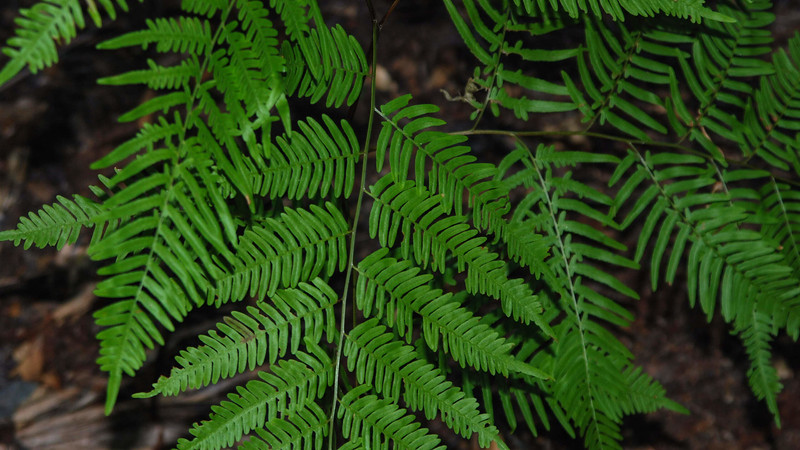 bright green fern fronds up close