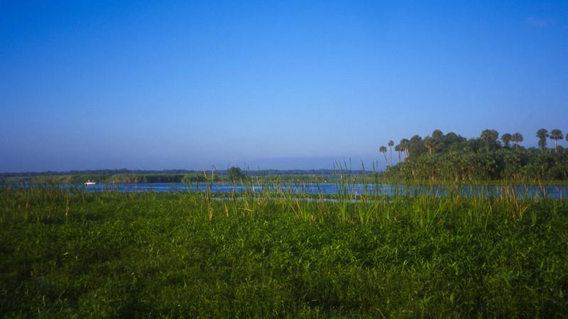 St Johns River marshes