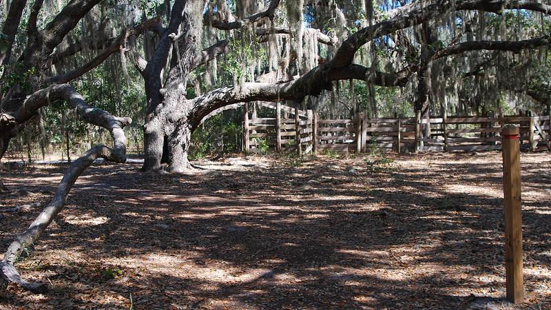 Old corral under oak