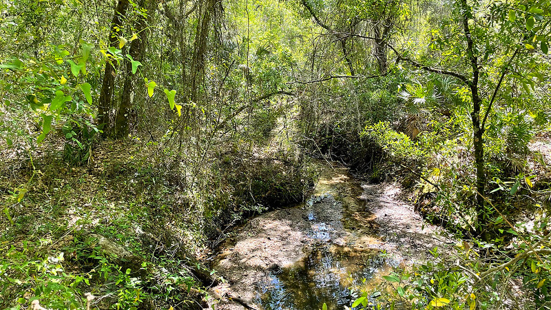 Creek in mixed hardwood forest