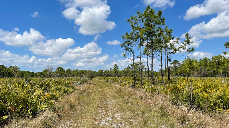 Open palm-pine flatwoods