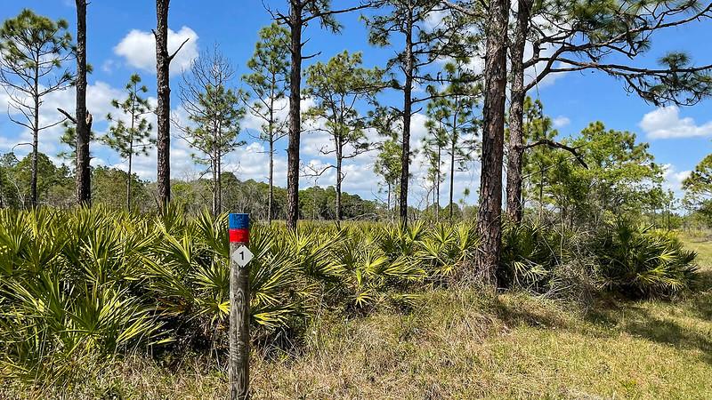 Blaze post along trail in pines