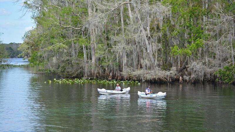 Kayakers and manatees