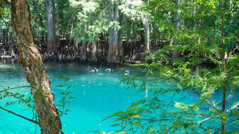 Divers in Manatee Springs