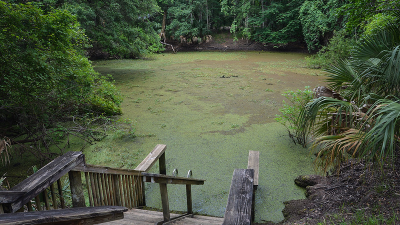 Steps leading into sinkhole covered in duckweed