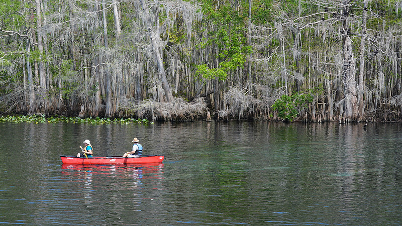 People in canoe with manatees in water around them