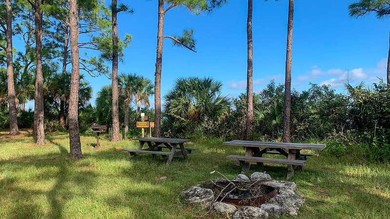 Grassy camping area under pines with picnic table and grill