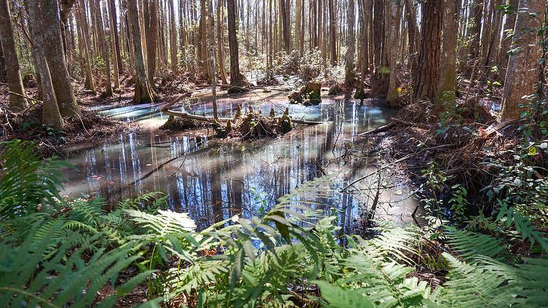 Rainbow swamp glistening in pastels