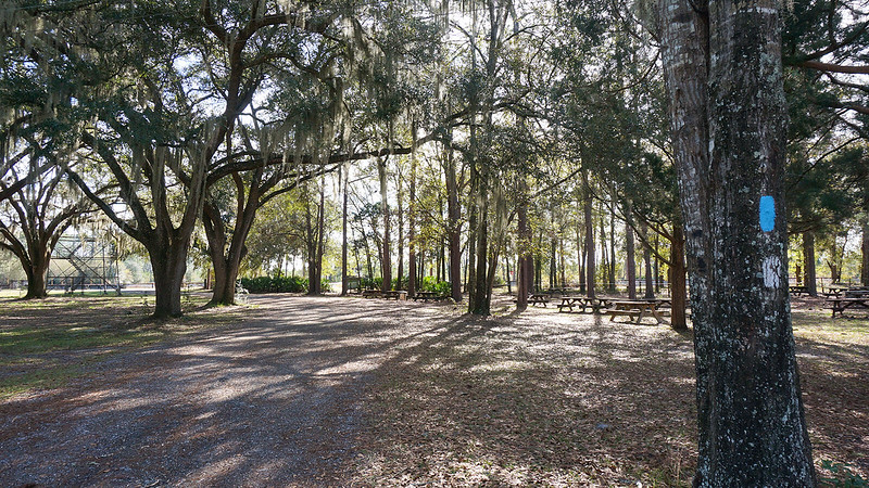 Picnic area under oaks at Olustee fire tower