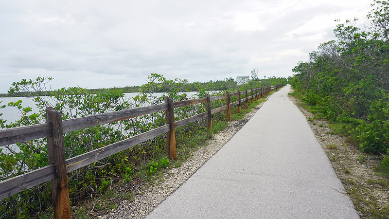 Split rail fence with mangroves and water beyond it