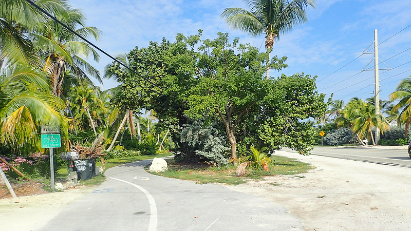 Bike path vanishes into tropical plantings