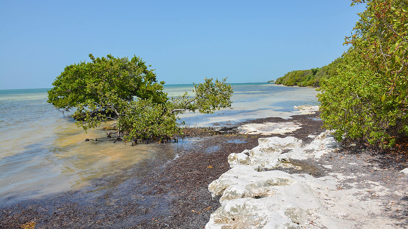 Rocky shoreline with mangroves and sea grass