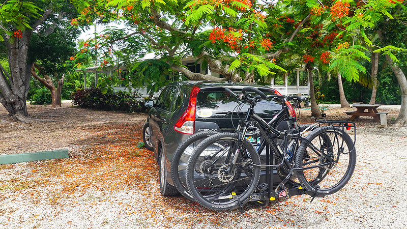 SUV with bikes on back under flowering tree
