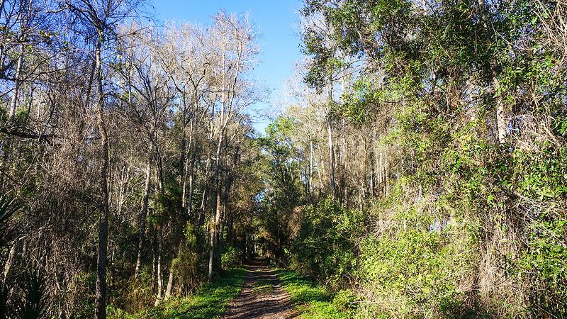 Causeway through swamp