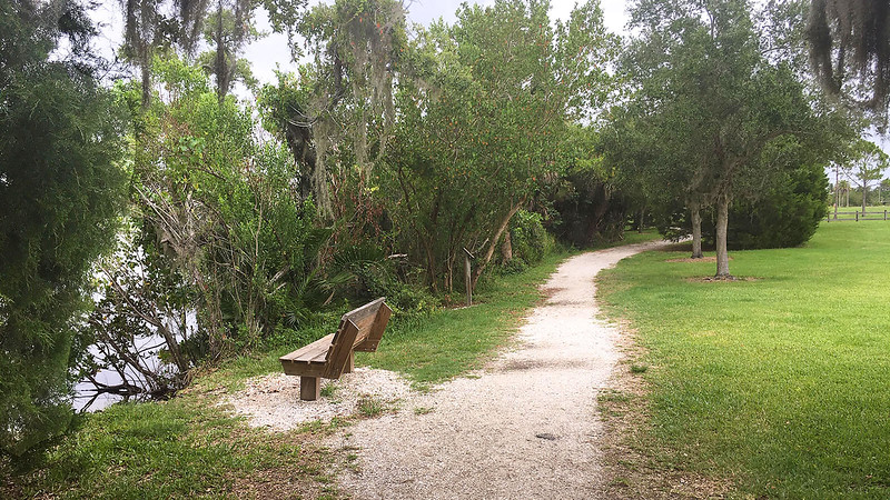 Bench and mangroves