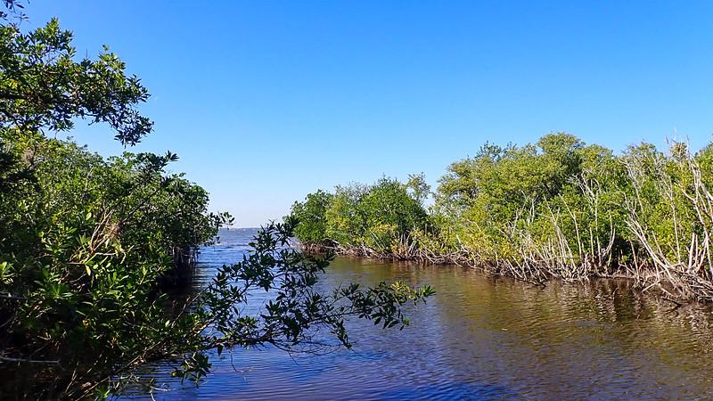 Water between mangroves with broad view beyond