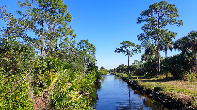 Long canal between pines and palms