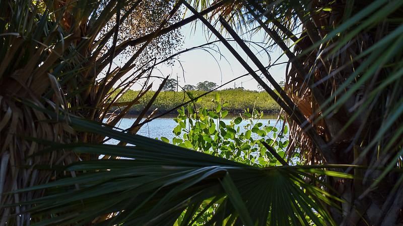 Peeking between palms to open water