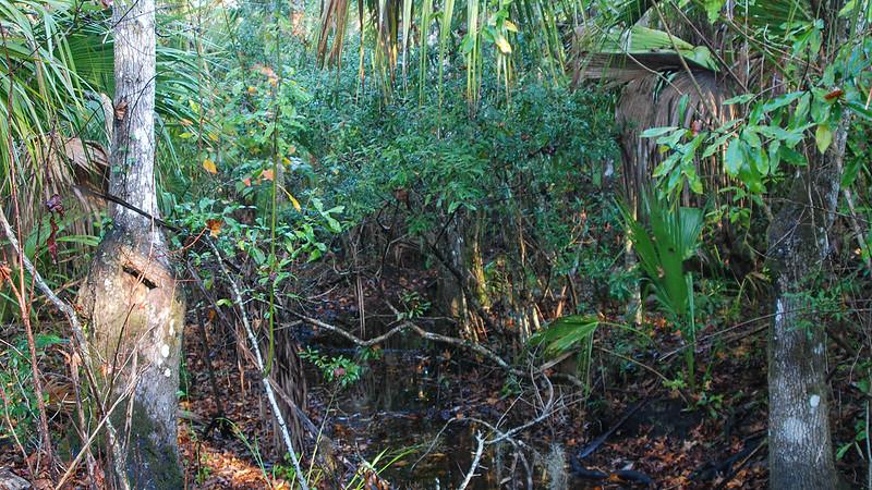 Stream under palms