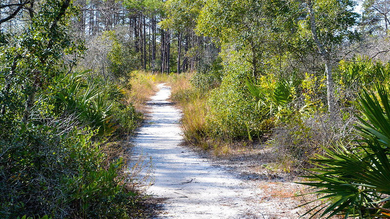White sand path through oaks and palms