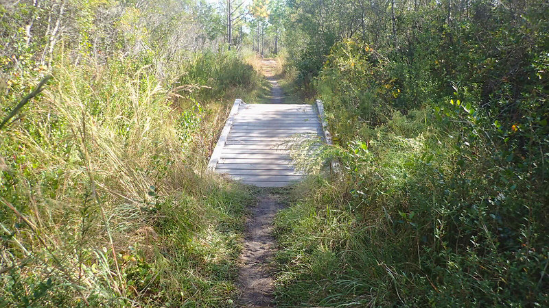 Bridge along trail