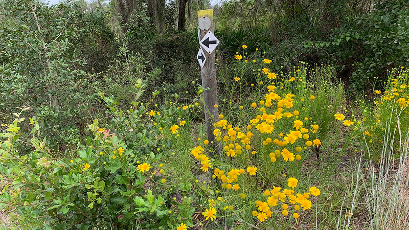 Wildflowers at base of yellow-blazed post