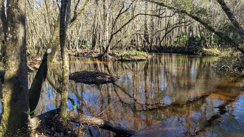 Tree reflections in tannic creek