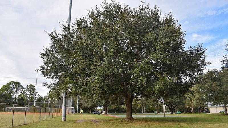 Ballfield at Parrish Park