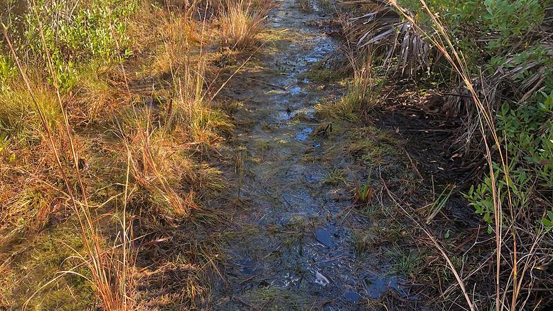 Damp trail in grasslands