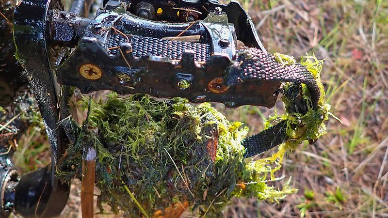 Algae and moss clinging to bike pedal