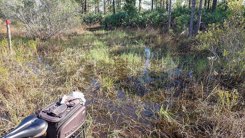 Back end of bike in a wetland