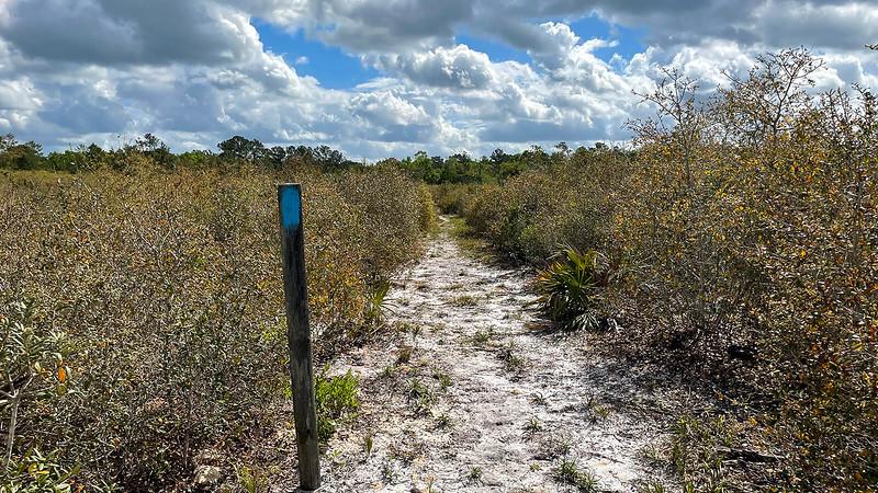 Narrow path through oak scrub