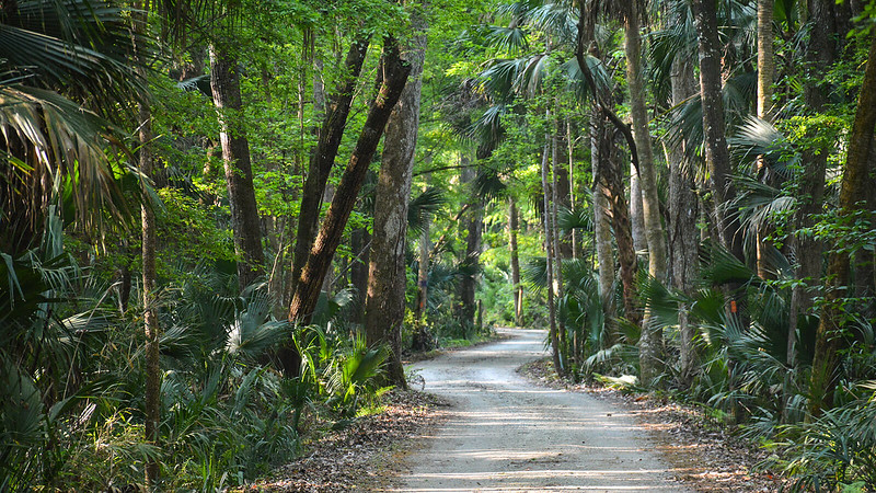 Forest road winding through lush forest