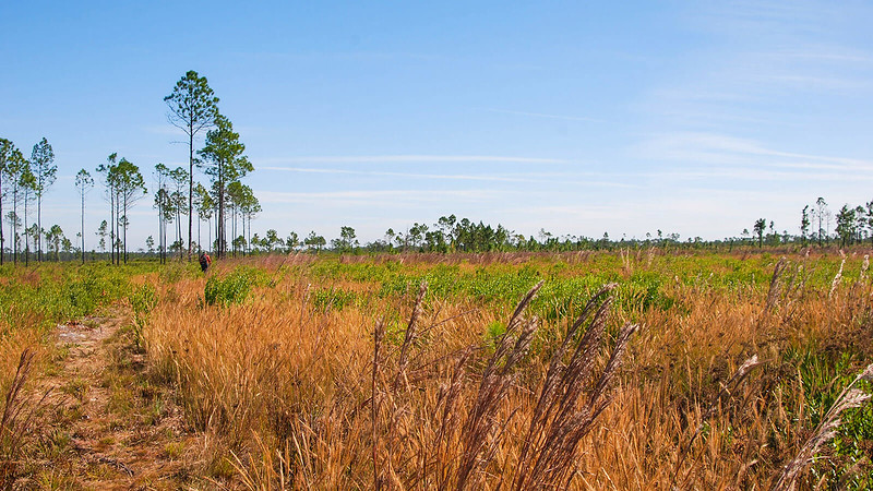 Open prairie with scattered pines
