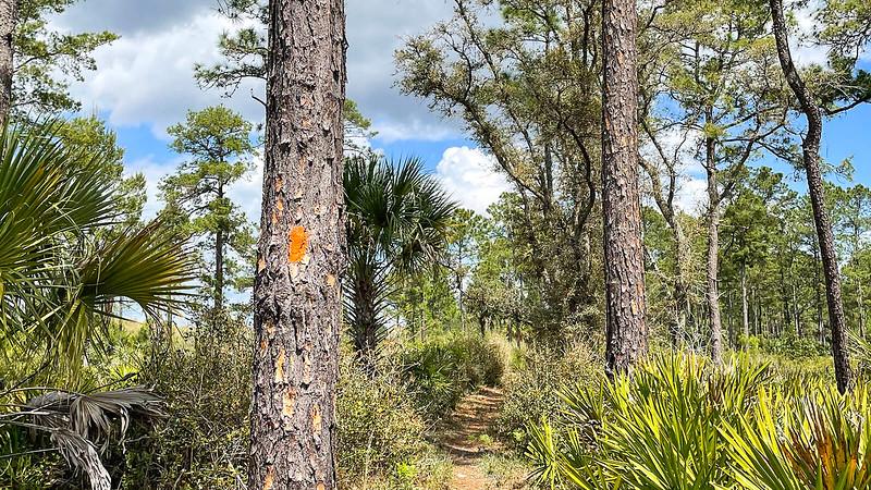 Blazes marking Florida Trail