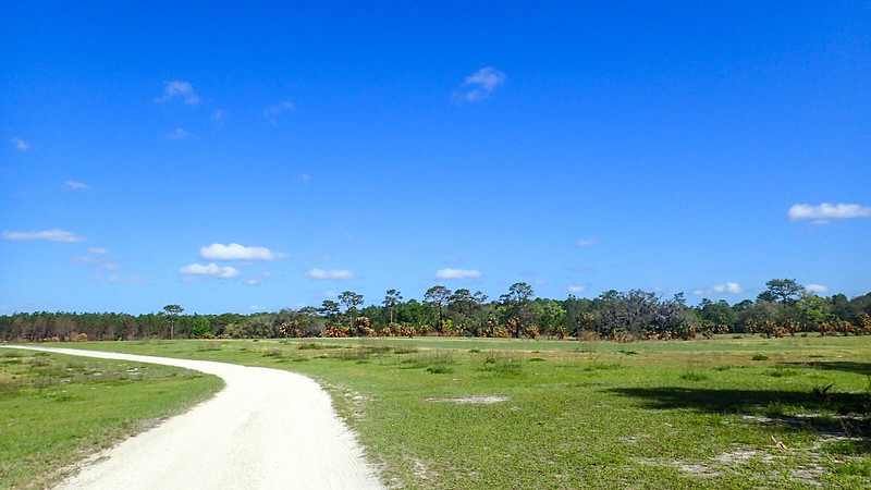 Open pasture with dirt road