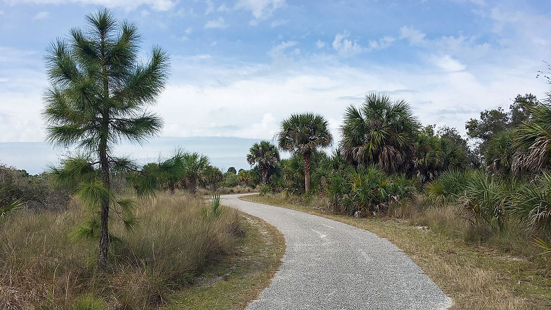 Paved trail past pine