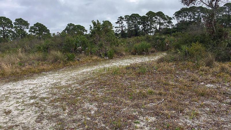 Trail in coastal scrub