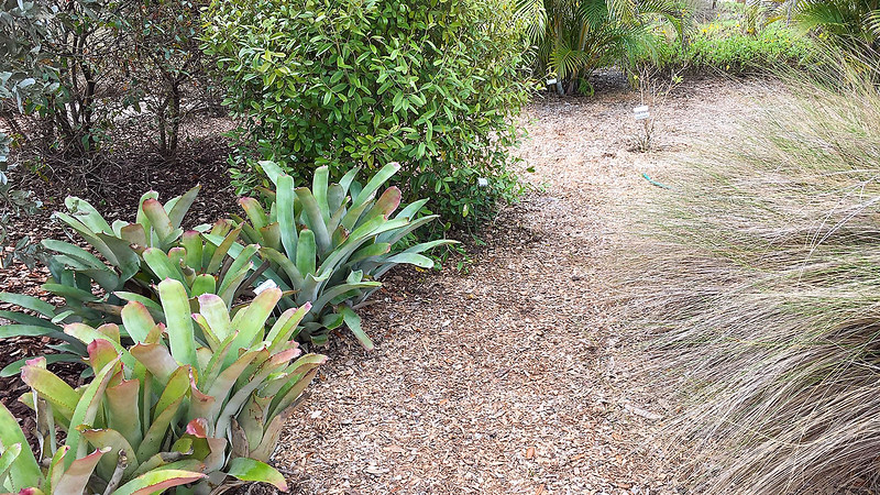 Florida native plants in garden setting